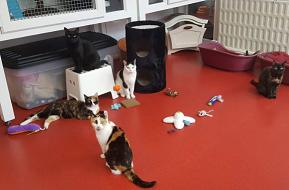 Resident animal at Pennine Pen Animal Rescue in Manchester, UK