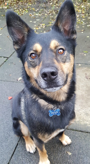 Adoptable dog at Pennine Pen Animal Rescue in Manchester, UK