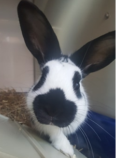 Adoptable small animal at Pennine Pen Animal Rescue in Manchester, UK